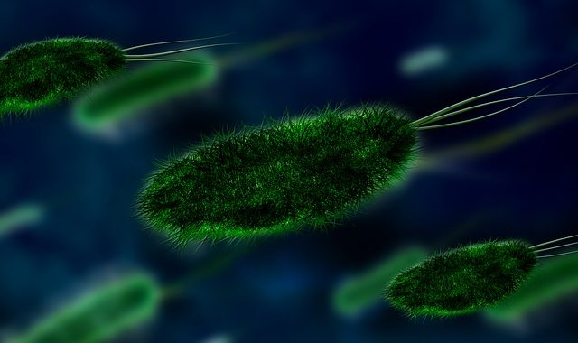 Quantum physics can help biology answer life's biggest questions