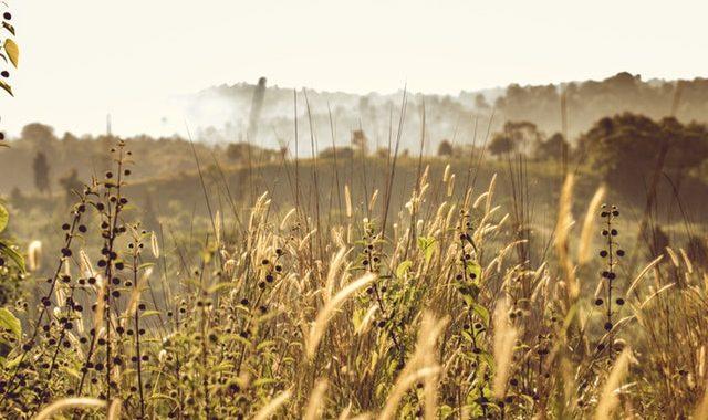 Understanding organic wholeness