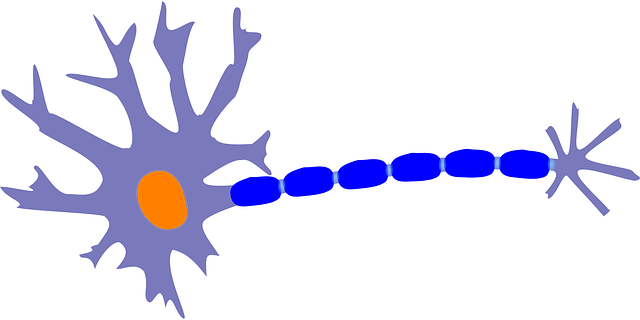 Study finds a single neuron is a complex system